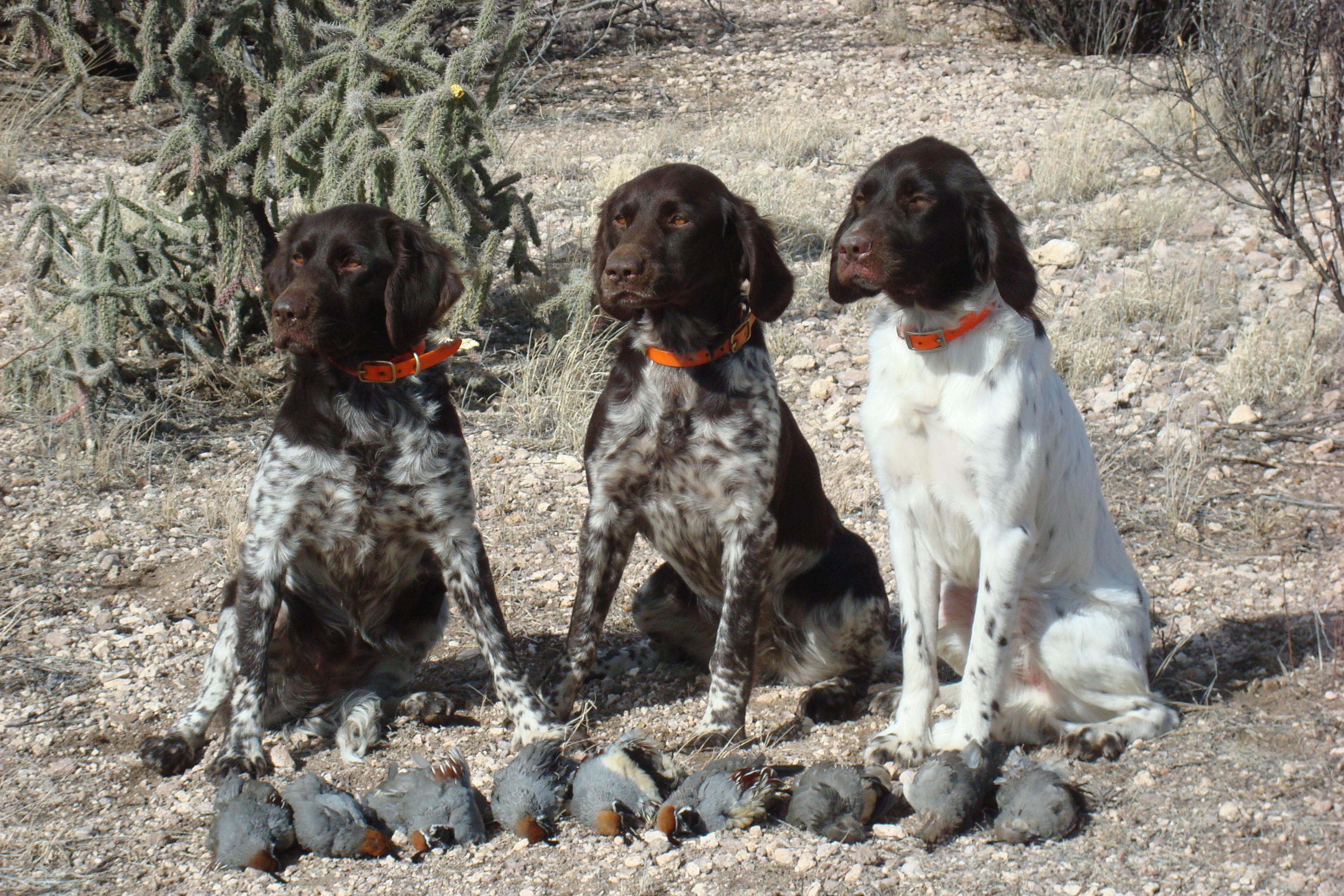 New Mexico Quail Hunting Adventure