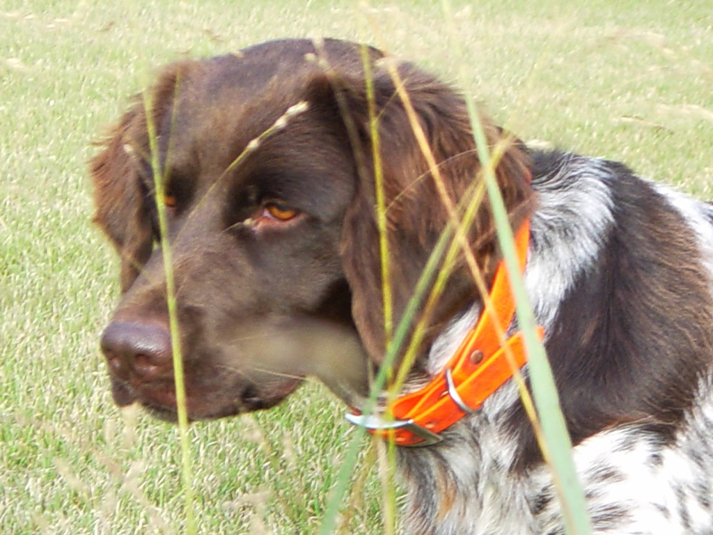 Naming Your Hunting Dog
