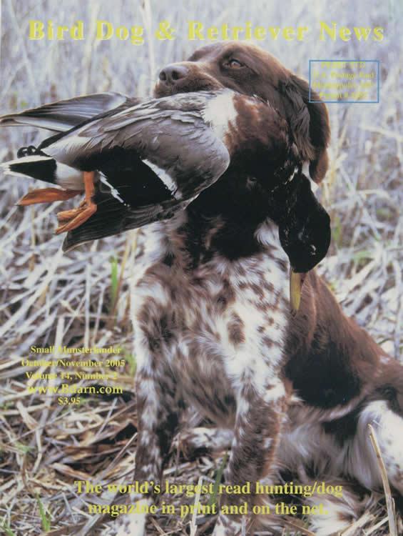 Upland Bird Dog Breeds
