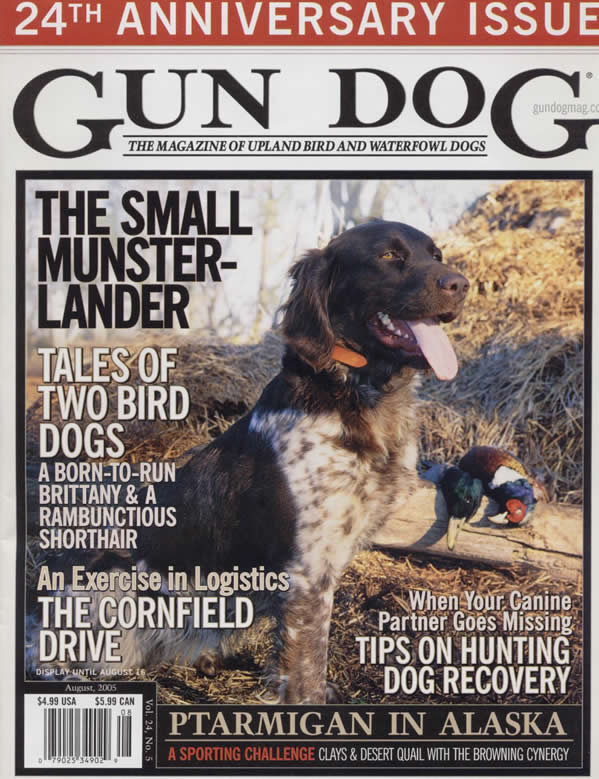 A Kleine / Small Munsterlander Hunting Dog Breeder